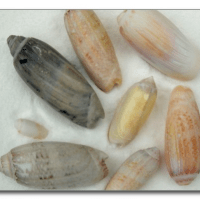 The Secret to Collecting Seashells You'll Keep