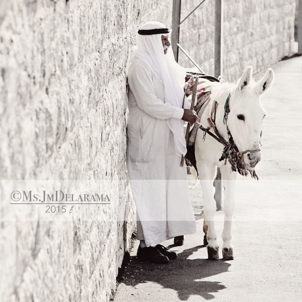 arab man donkey tel aviv israel work photography people