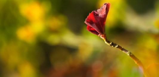 budding-flower-self-care-yoga-meditation