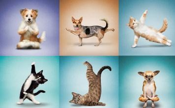 yoga-cats-and-dogs-dan-borris-interview