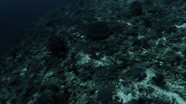 Clip 14: School of juvenile game fish, Domino Damsels and Moorish Idols. Dive site: Big T-Wall