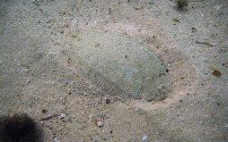 A Flounder in Dar es Salaam 1680 x 1050