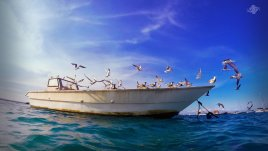 Birds in Msasani Bay 1366 x 768