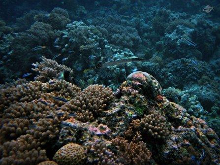 Zanzibar Reef 1024 x 768