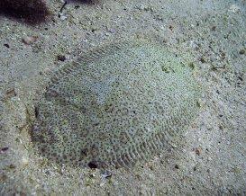 Flounder 1280 x 1024