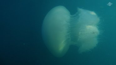 Side View of the Giant Jelly 1366 x 768
