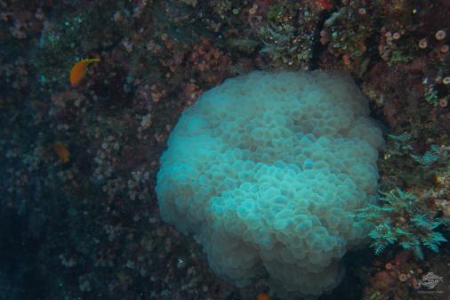 scuba diving mafia island Tanzania East Africa