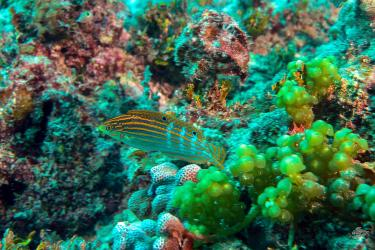 diving scuba Powoni near Paje in Zanzibar
