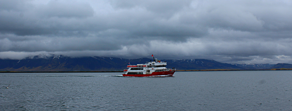 Whale watching tour in Iceland