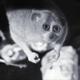 Bristol Zoo uses Xvision IP CCTV to study Animals
