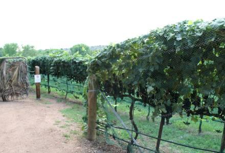 page-springs-wine-vines