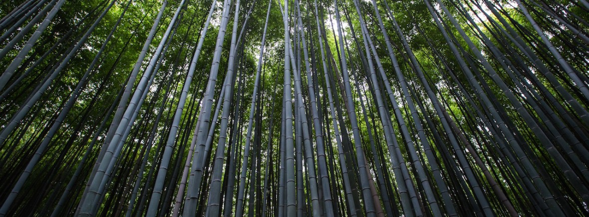 BambooForest-1180x435