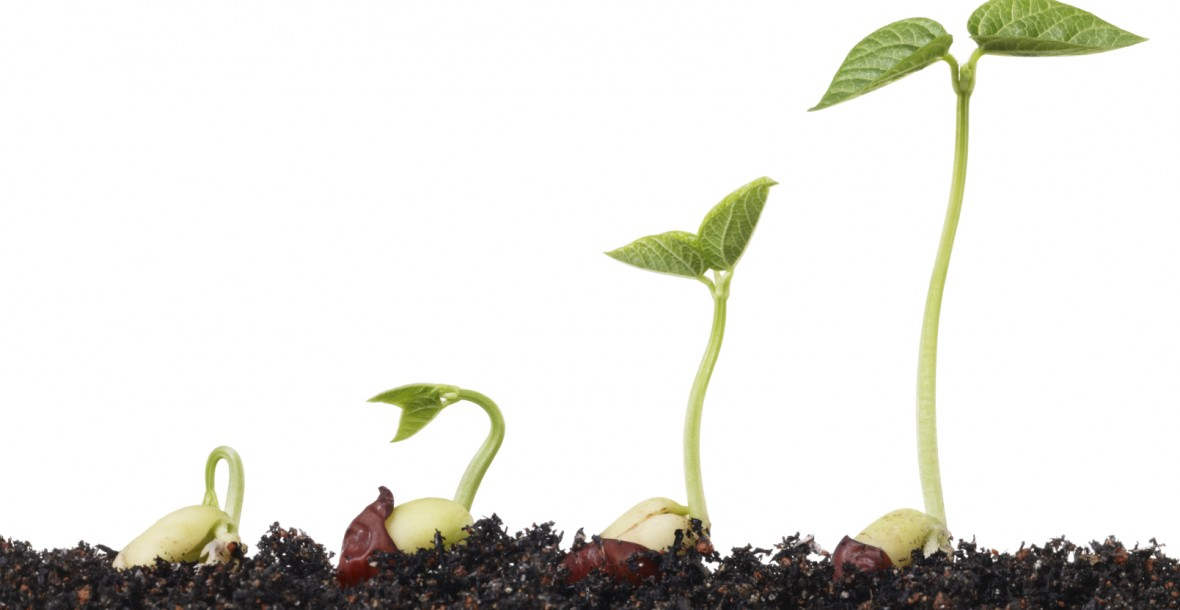 seeds-sprouting-in-soil-1180x610
