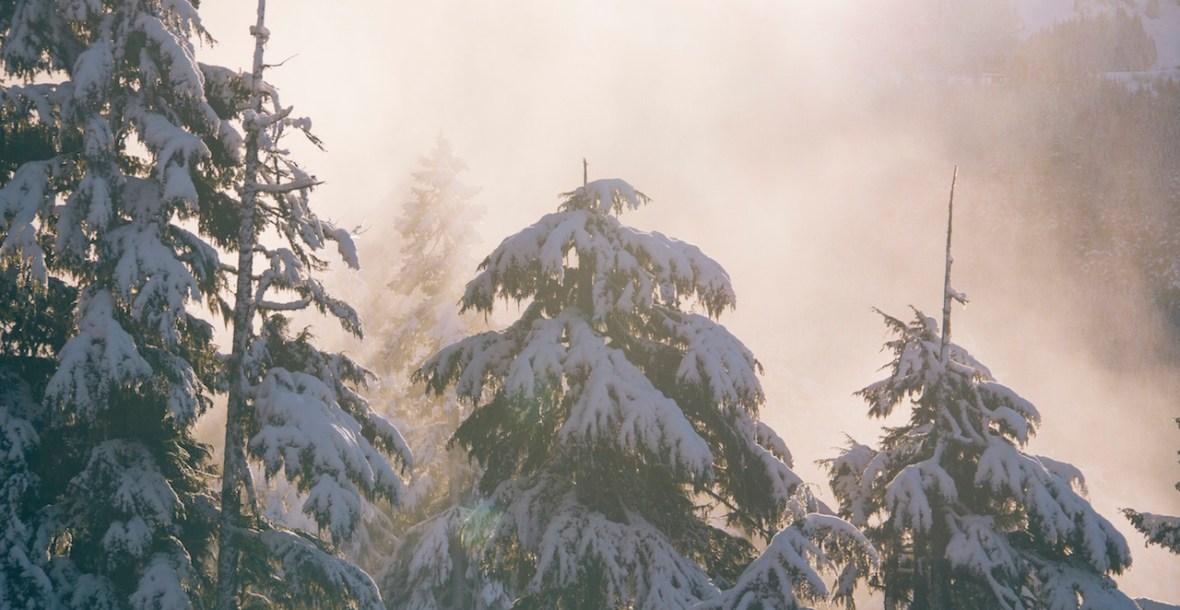 snowspruce