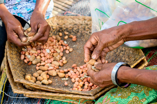 Farmers in Viqueque shell their Utamua peanut seed in preparation for bagging © Yessy Octaviana/Seeds of Life