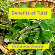 Benefits of Tulsi