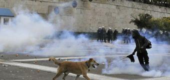 ¿Qué hacer cuando tu mascota se ve expuesta a gases lacrimógenos?