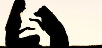 México: Aseguradora Mexicana asegura a tu mascota contra cualquier accidente