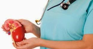 sehat alami - waspdai organ ginjal