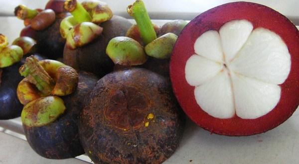 Sehat Alami - Khasiat Kulit Manggis, Harapan Baru Bagi Penderita Kanker