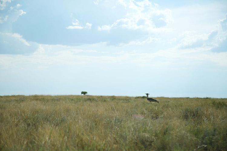 エトシャ国立公園 鳥