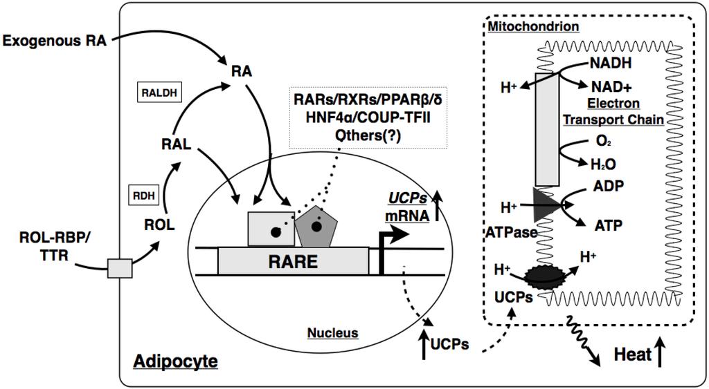 电路 电路图 电子 原理图 1024_563
