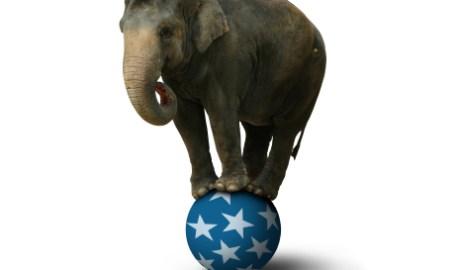 大象是助手還是幫手