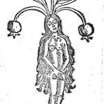 Hortus Sanitatis' female mandrake