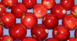 sensyria - تفاح إيطالي