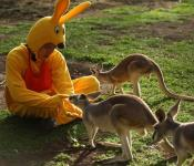 What Running Man Should Have Done in Australia