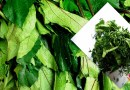 HEALTH: 10 Reasons Ugwu Is Necessary For You