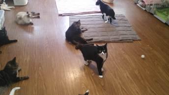 20匹ほどの猫たちがのびのびと暮らすシェルターの一室。