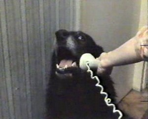 """Hello. Yes this is dog. I can't discuss the attack plans on this line. Call my master's cell."""