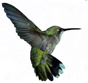 They named it ZunZuneo for the Cuban slang for a hummingbird tweet because, f*ck you, bird jokes are funny.