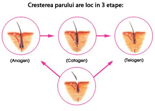 tipuri de creștere a parului