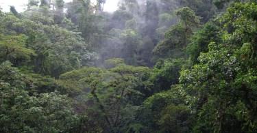 bosques costa rica 3