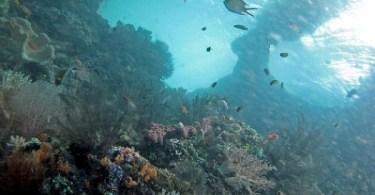 El Dorado de los arrecifes coralinos
