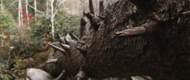 fallen-tree.0000000