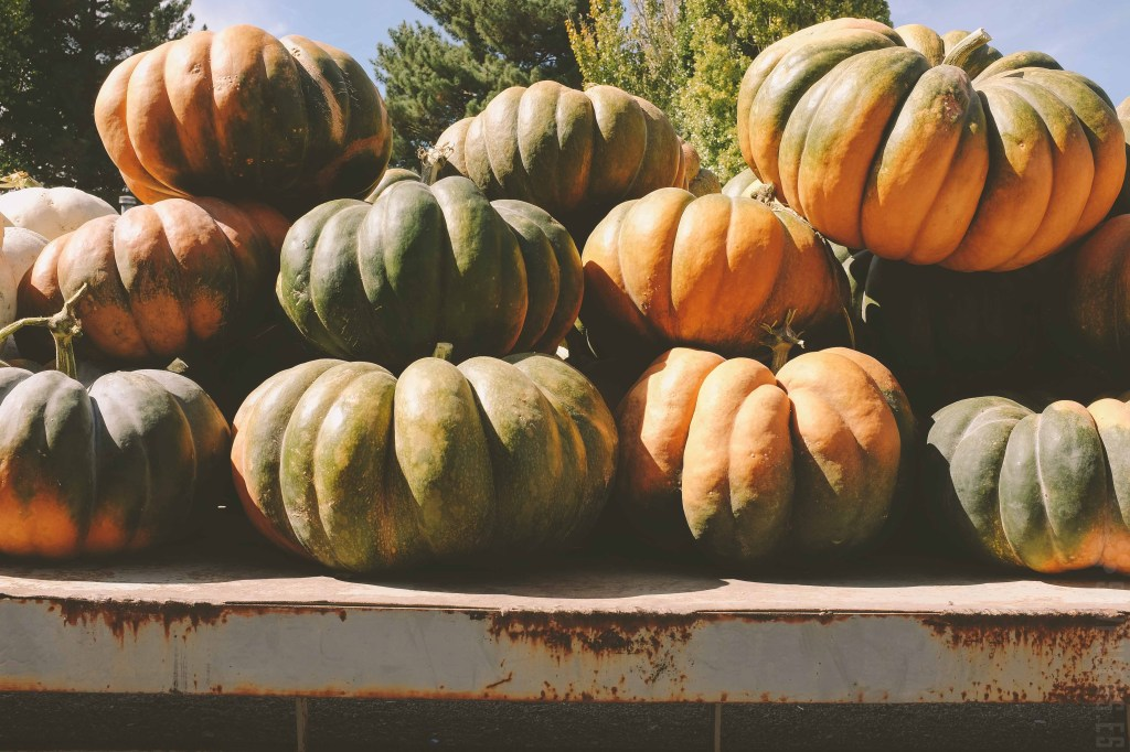 Pumpkin_Patch-28