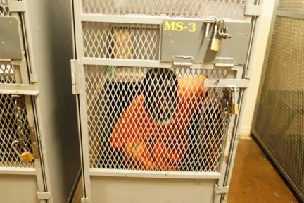 An inmate sits in a cage at the California Institution for Men state prison in Chino