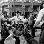 Cops let their attack dogs loose on a 17-year-old protester in this iconic photo from the Civil Rights Movement. – Photo: Bill Hudson, AP