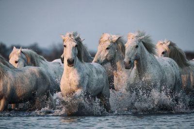 Seven horse wallpaper - SF Wallpaper