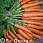 fresh organic dutch carrots