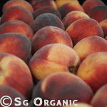 juicy organic peaches