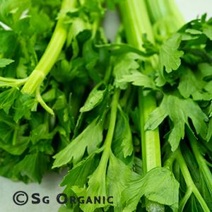 celery-750g_sgo