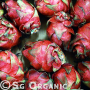 sweet exotic organic dragonfruit