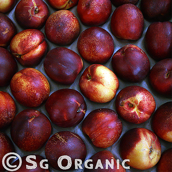 Peach-like fruit with  with a vibrant purplish-red colour and smooth skin