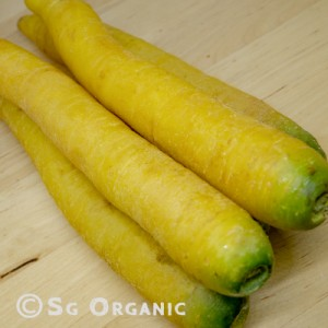 yellow carrots_sgo