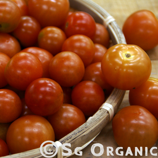 Small sized tomatoes with low calories.