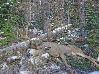 deer-trophies-21